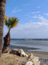 Beach with palm trees in December, the Mediterranean Sea Cyprus Royalty Free Stock Photo