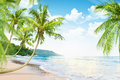 Beach with palm trees Royalty Free Stock Photo