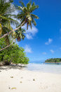 Beach with palm trees tropical tropic plants white sand granite rocks a turquoise sea and a blue sky white clouds seychelles Stock Photo