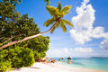 Beach with palm tropical exotic trees and and turquoise sea under a blue sky seychelles praslin Stock Photo