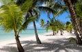 Beach with Palms at the Bahamas Royalty Free Stock Photo