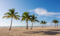 Beach with palms on a in florida Royalty Free Stock Photography