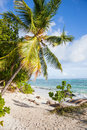 Beach with palms tropical palm trees tropic plants white sand granite rocks a turquoise sea and a blue sky white clouds seychelles Stock Photos