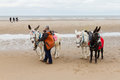 Beach ride donkeys at the beach on a cloudy day