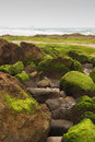 Beach with rocks covered with green algae Royalty Free Stock Photos