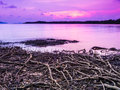 Beach with roots on sea sky purple sunset covered by to the evening at kohmak trat thailand Royalty Free Stock Images