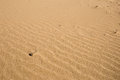 Beach sand background in winter Royalty Free Stock Image