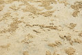 Beach sand of crab markings Royalty Free Stock Photo