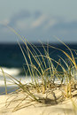 Beach Sand Dune Royalty Free Stock Photo