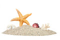 Beach with sand starfish and shells Royalty Free Stock Photo