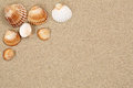 Beach scene in summer holiday with sand, sea shells and copyspac Royalty Free Stock Photo