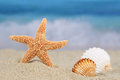 Beach scene in summer on vacation with sea shells and stars, cop Royalty Free Stock Photo
