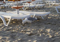 The beach with a seagull on under umbrellas Royalty Free Stock Photo