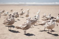 Beach seagulls Royalty Free Stock Photo