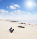 Beach with seashell closeup of a on a sunny small depth of field focus on the blue shell Royalty Free Stock Images