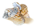 Beach shells with minimal dissolved sand background on white Stock Image