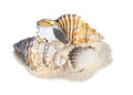 Beach shells on sand Royalty Free Stock Photo