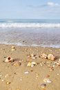 Beach with shells by the sea Stock Photos