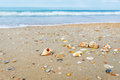 Beach with shells by the sea Stock Photography