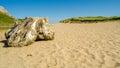 Beach stump Royalty Free Stock Photo