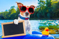 Beach summer dog Royalty Free Stock Photo