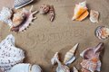 Beach summer sea shells beautiful background texture Royalty Free Stock Photo