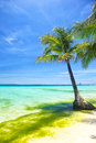 Beach on summer season picture with palm tree over clean blue sky and bluish water Stock Photos