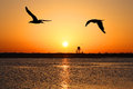 Beach sundown at the in spain with two seagulls flying over the water Royalty Free Stock Images