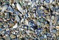 Beach surface covered with broken sea shells along the Laguna Beach coastline. Royalty Free Stock Photo