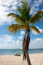 Beach time palm tree and tourists at a beautiful on south florida Stock Image
