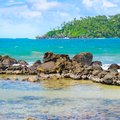 Beach tropical ocean with coral and palms trees Royalty Free Stock Photo