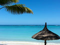 Beach tropical paradise palms vacation sea and clear blue daytime concept of relaxation and photo taken with smartphone Royalty Free Stock Photography