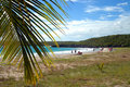 Beach on vieques Stock Photos