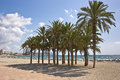 Beach at villajoyosa and palms alicante spain Stock Photos