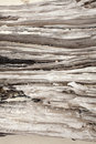 Beach wood log texture of on a with white sand jammed Stock Photography