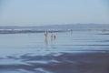 Beachcombers explore the sandy beach Royalty Free Stock Photo