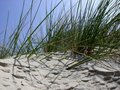 Beachgrass Stock Photos