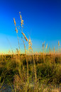 Beachgrass at Honeymoon Island II Royalty Free Stock Images