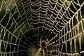 Beaded cobweb Royalty Free Stock Photography