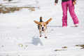 Beagle jumping in snow puppy learning to sit Stock Photo