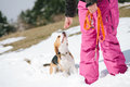 Beagle learning in snow puppy to sit Royalty Free Stock Photos