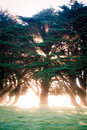 Beaming tree Stock Photography