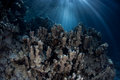 Beams of light in tropical lagoon sunlight illuminate a reef palau s palau is a micronesian island group known for its high marine Stock Image