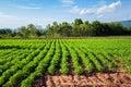 Bean Farm