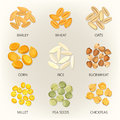 Bean and grains of seasonal plant, seed icons