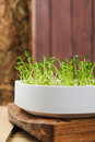 Bean sprouts Stock Photos