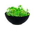 Bean sprouts in the black bowl Royalty Free Stock Images