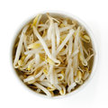 Bean Sprouts Isolated Royalty Free Stock Photo