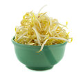 Bean sprouts isolated on white background. Royalty Free Stock Photo