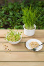 Bean sprouts vegetable concept of agriculture Royalty Free Stock Image
